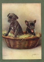 French Bulldog  tobacco cigarette card postcard dogs 1930's #011